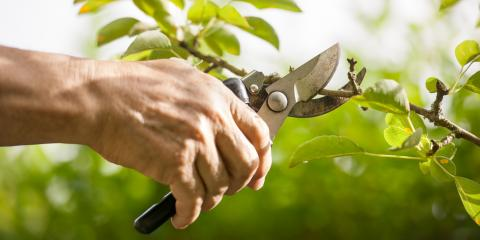 Top 3 Reasons Why Oak Tree Pruning Is Best Done in Fall & Winter, South Brazos, Texas