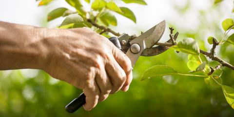 4 Seasons Tree Service, Tree Service, Services, Newburgh, New York