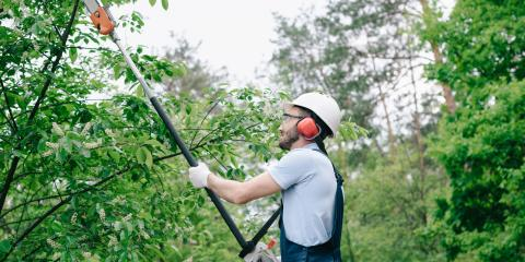 3 Reasons to Prune Your Trees, ,