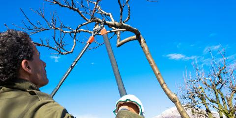Why You Should Leave Tree Pruning to the Professionals, Florence, Kentucky