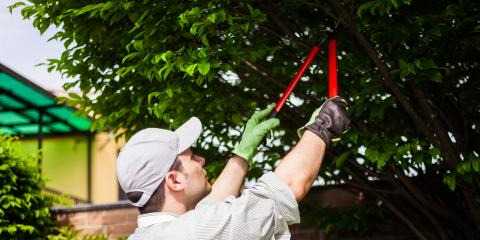 What Are the Benefits of Tree Pruning?, North Hobbs, New Mexico