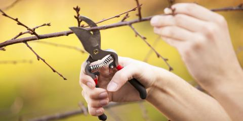Why Tree Pruning Should Be Part of Your Tree Care Routine, Newburgh, New York