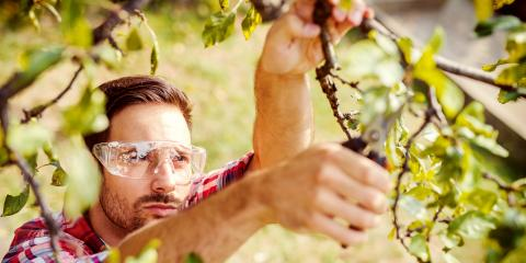 Why Should You Have Your Trees Pruned & When Should It Be Done?, ,