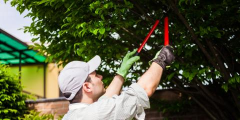 The Do's & Don'ts of Tree Pruning, Dayton, Ohio