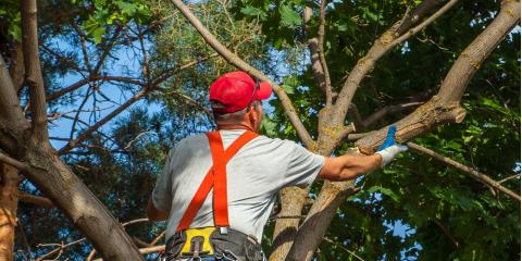 5 Signs It's Time for Tree Pruning, Macedon, New York