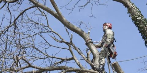 3 Signs Your Tree Needs Pruning, Springfield, Ohio