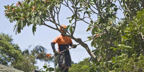 The Top 3 Benefits of Tree Pruning, Wiota, Wisconsin