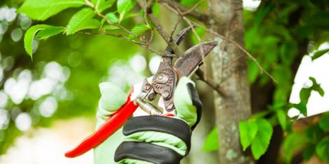 Tree Pruning: The Difference Between Thinning Out & Topping, Summerdale, Alabama