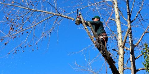3 Signs You Need Tree Trimming Services, La Grange, New York