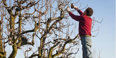 5 Top Tree Pruning Tips from Kalispell Tree Removal Service, Kalispell, Montana