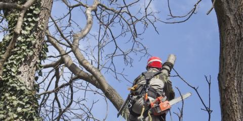 5 Reasons to Schedule Regular Tree Pruning Services, Newport-Fort Thomas, Kentucky