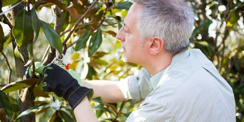 Landscaping Experts Address FAQs About Tree Pruning , Macedon, New York