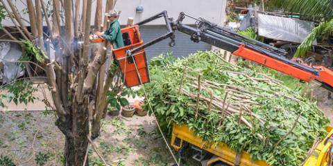 What You Need to Know About Eco-Friendly Land Clearing, Anchorage, Alaska