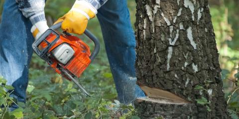 3 Ways to Prepare for Tree Removal, Anchorage, Alaska