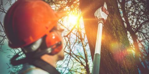 3 Warning Signs You Need Tree Removal, Anchorage, Alaska