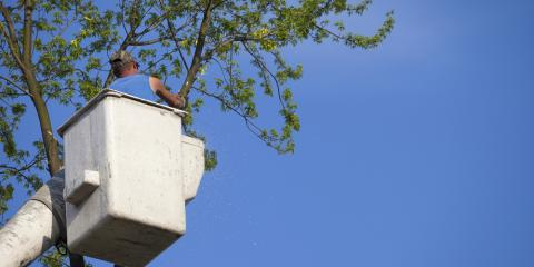 3 Easy Ways to Tell if a Tree on Your Property Is Dying, Anchorage, Alaska