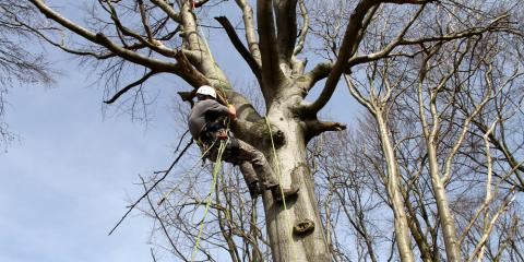 Why Tree Removal Should Be Left to a Professional, Guilford, Connecticut