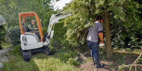 Tree Removal Do's & Don'ts, Hempstead, New York