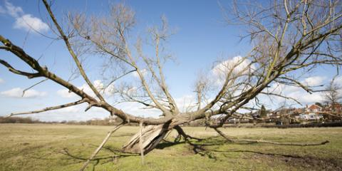 How Do You Know When Tree Removal Service Is Necessary?, High Point, North Carolina