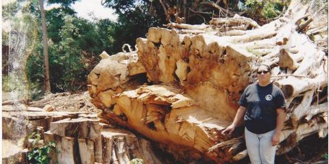 5 Signs You Need Professional Tree Removal, Hilo, Hawaii