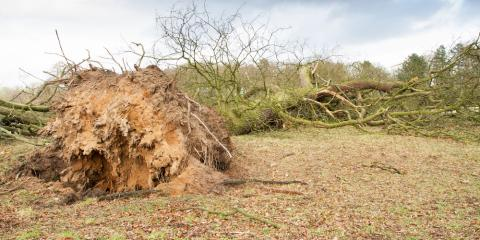 How to Know When It's the Right Time for Tree Removal, Kalispell, Montana