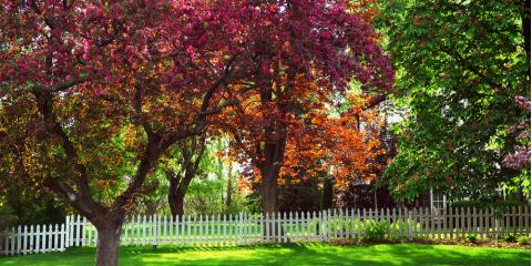 Local Tree Removal Service Shares 3 Ways to Detect a Dead Tree in Your Yard, Lexington-Fayette, Kentucky