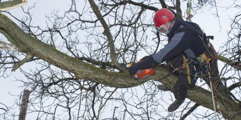 Why You Should Hire Professionals for a Tree Removal, Milton, Pennsylvania