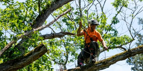 3 Serious Risks of Not Removing Diseased Trees, ,
