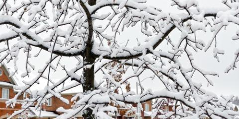 The Top 3 Ways to Help Your Trees Survive the Winter, Center City, Minnesota