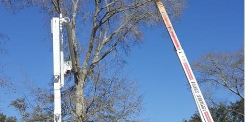 3 Qualities of a Reliable Crane Service Company From Alabama's Top Arborists, Summerdale, Alabama