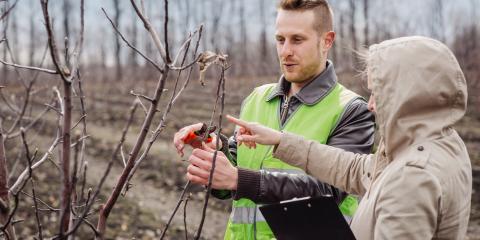 3 Ways to Spot a Sick Tree, Hopewell, Ohio