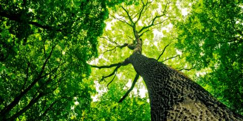 7 Reasons to Schedule Tree Removal, West Columbia-Cayce, South Carolina