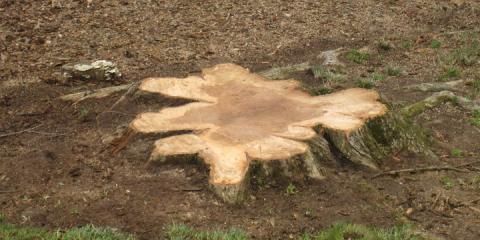 What You Need to Know About Stump Removal From Adirondack Tree Experts, Beltsville, Maryland