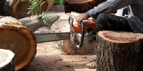 5 Undeniable Signs You Need Tree Removal Service, Lexington-Fayette, Kentucky