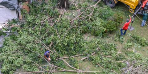 Top 3 Signs It's Time for Tree Removal, Clarksville, Texas