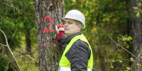 3 FAQ About Emergency Tree Services, Clinton, Michigan