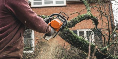 3 Reasons When Tree Removal is Necessary, Cincinnati, Ohio