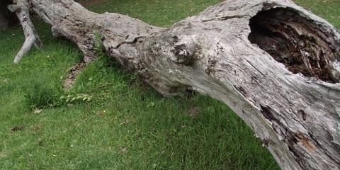 West Hartford's Best Tree & Stump Removal Services, West Hartford, Connecticut