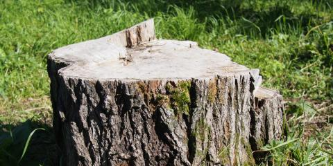Tree Service Pros Discuss Differences Between Stump Removal and Grinding, North Huntingdon, Pennsylvania