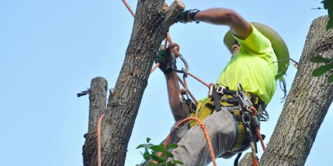 Tree Service Special!  23% off for first-time customers!, Batavia, Ohio