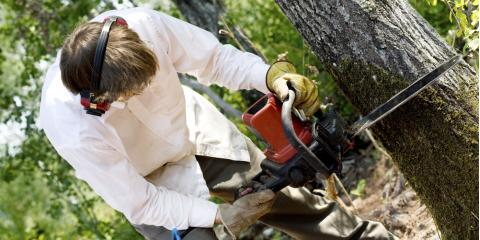 5 Questions to Help You Decide When It's Time for Tree Removal, Lexington-Fayette, Kentucky