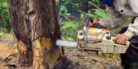 FAQ About Tree Removal, St. Louis, Missouri
