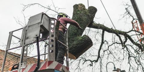4 Questions to Ask Before Choosing a Tree Service, Baldwin, Georgia