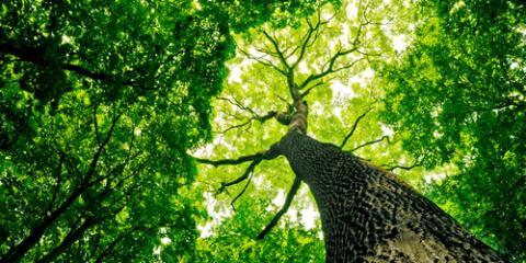 3 Common Tree Diseases & Symptoms, Anchorage, Alaska