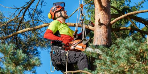 How to Hire a Trustworthy Tree Service: 3 Factors to Keep in Mind, Bastrop, Texas