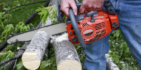 Cincinnati's Trusted Tree Service Explains the Importance of Deadwooding, Harrison, Ohio