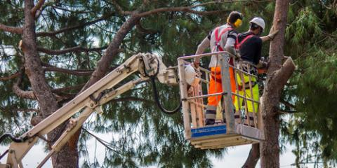 What to Know When Hiring a Tree Service Company, Holland, Wisconsin