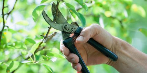 Why Tree Service Companies Advise Against DIY Foliage Maintenance, Holland, Wisconsin
