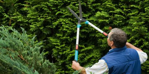 4 Questions to Ask Before Hiring a Tree Service Company, Honolulu, Hawaii
