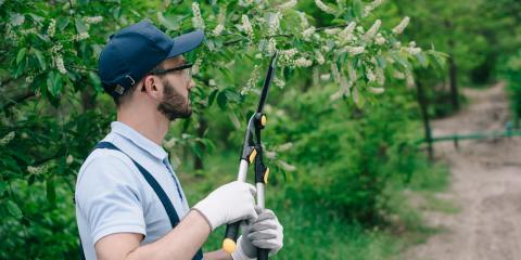A Homeowner's Guide to Spring Tree Care, De Motte, Indiana